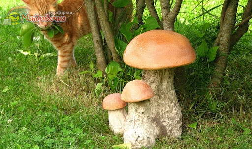 В лес по грибочки.